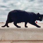 12 nombres para mascota relacionados con el clima y las estaciones