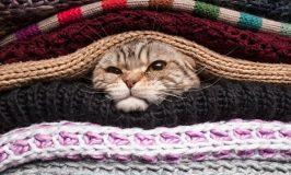 Protege a tu gato del frío