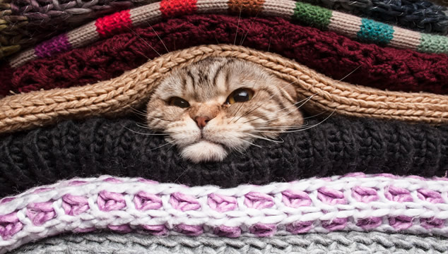 gato-con-frio