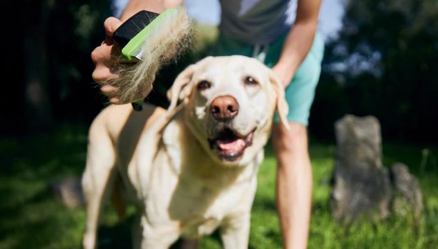 ¿Por qué debo cepillar a mi perro?