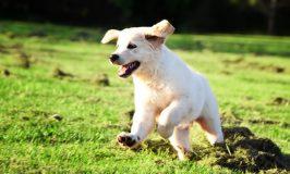 Las mejores razas de perros para correr