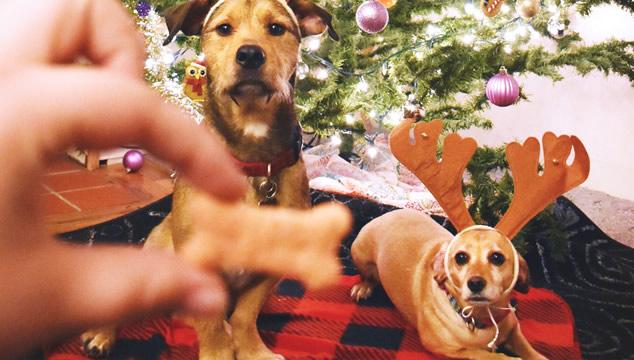 Los 3 mejores perros para seguir en Instagram