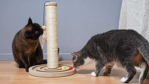 rascador-gato