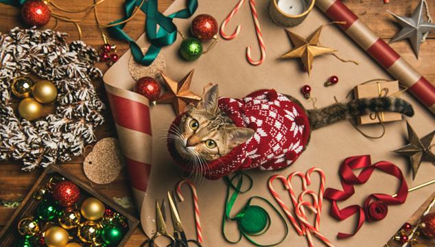 Conoce los 5 mejores regalos para tu gato