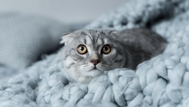 Mi gato se asusta con la gente