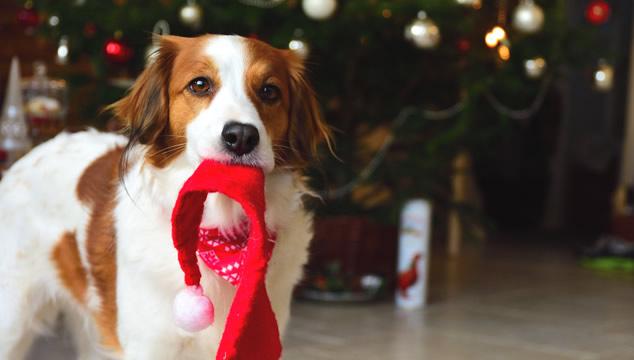Consejos para que tu perro tenga una buena Navidad