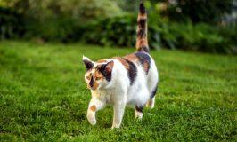 ¿Por qué algunos gatos se escapan de nuestra casa?