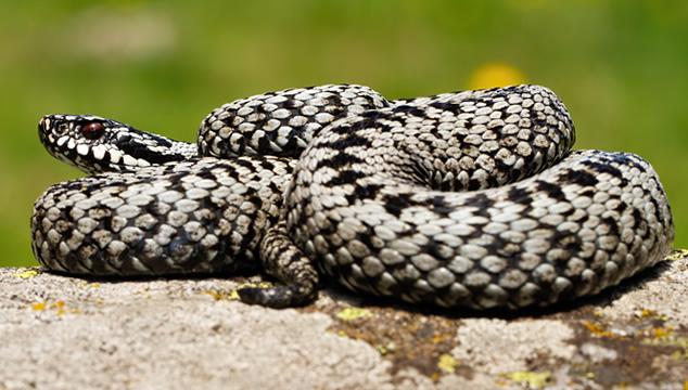 ¿Cómo se mantienen calientes las serpientes?