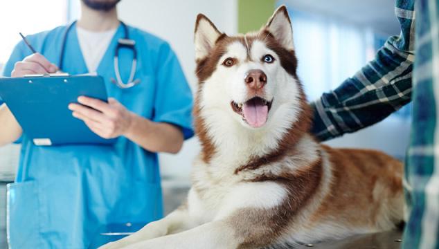 ¿Cuál es la temperatura normal de un perro?