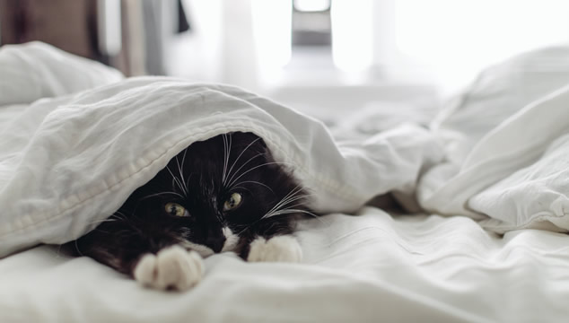Mi gato no me deja dormir