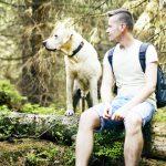 Las demostraciones de lealtad de los perros