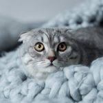 ¿Cómo reconocer el miedo en los gatos?