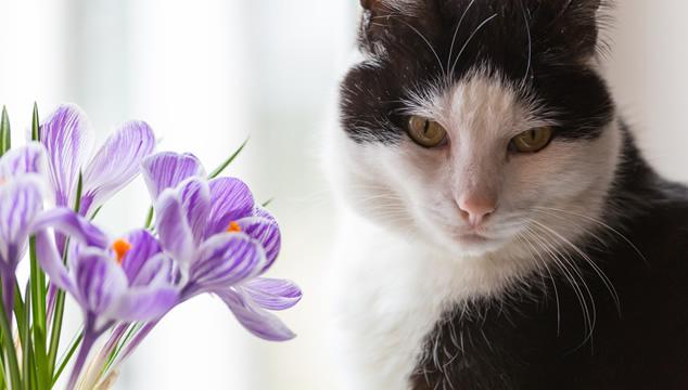 El cuidado de tu mascota durante la primavera
