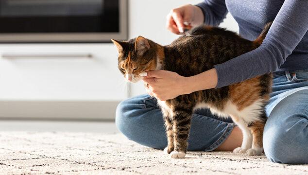 Cómo cuidar el pelaje de tu gato