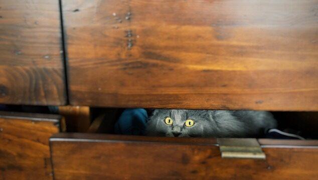El miedo en los gatos