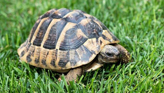 La hibernación de las tortugas