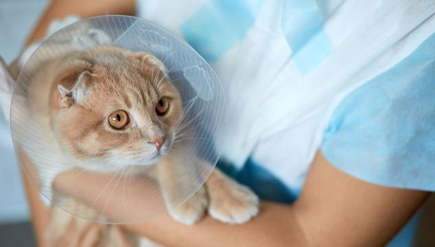 gato-en-veterinario