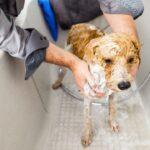 La importancia del baño en perros