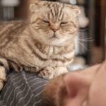 Dónde debe dormir mi gato