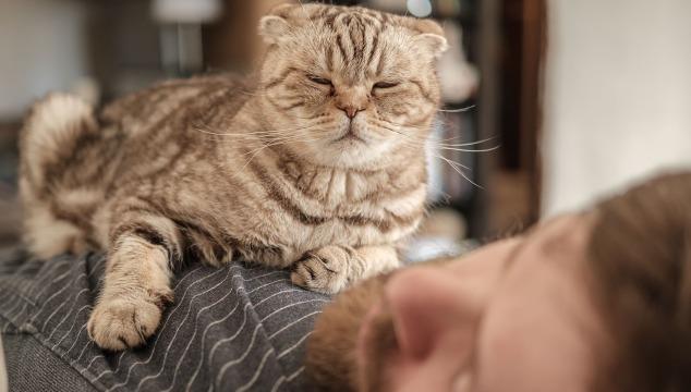 gato-duerme-en-persona