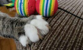 Ideas para jugar con tu gato