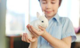 El conejo, una buena mascota para niños