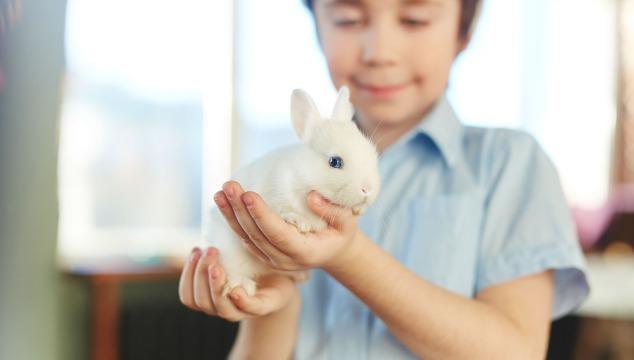 nino-con-conejo