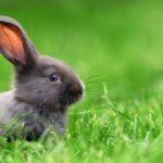 ¿Cuál es la mejor temperatura para mi conejo?