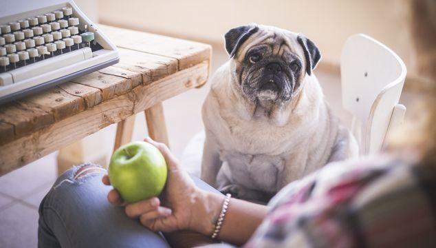 Comida que le puedes dar a tu perro
