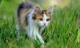 ¿Debo adquirir un gato macho o hembra?