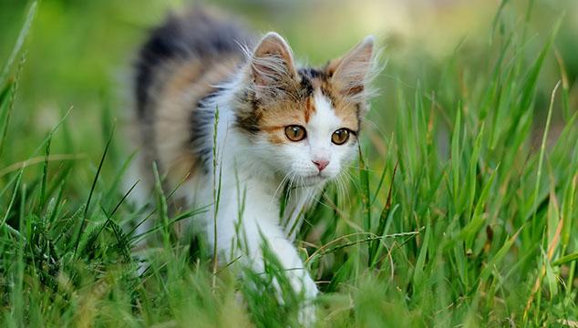 gatito-en-jardin